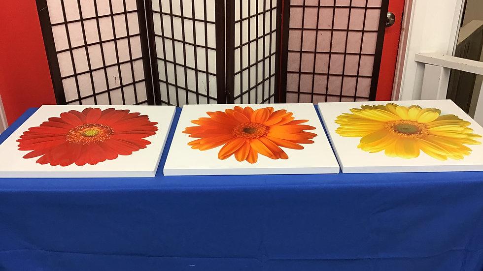 3 piece flower set 24x24 W
