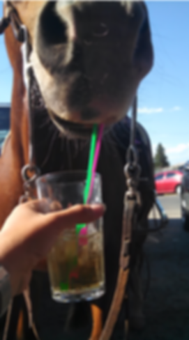 WhiskeyHorse.png