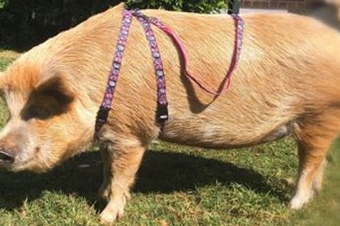Patterned Pig Harness