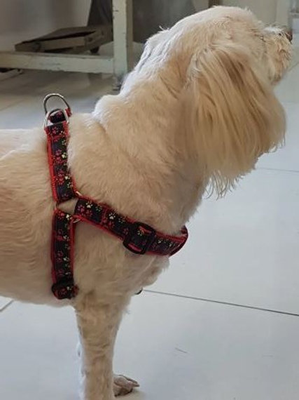 Patterned V Harness (X Small to Medium)