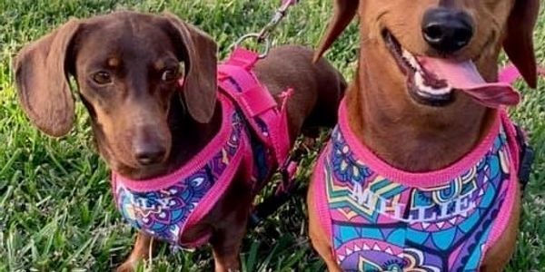 Dog Harness - PIC FOR PAGE.jpg