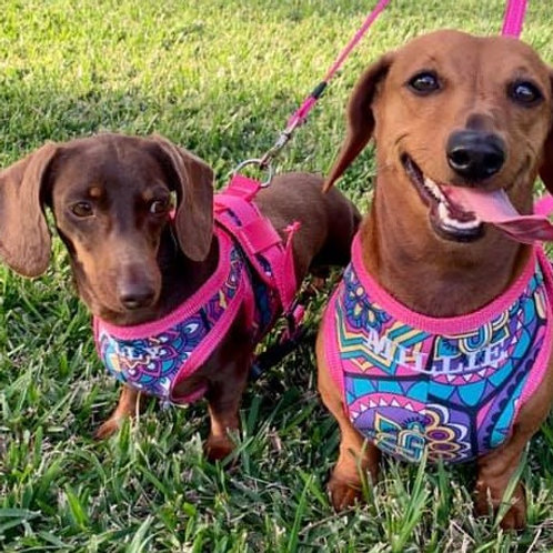 Chevalla Park Dog Harness (Small - up to 51cm)