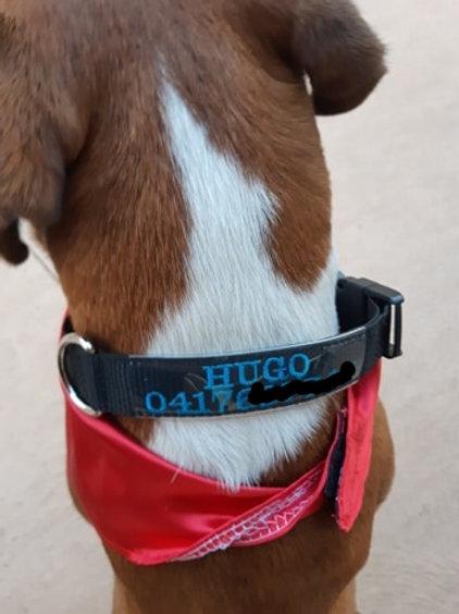 Personalised Collars