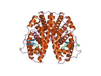 ERalpha protein.jpg