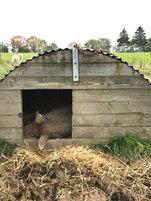Alternatives porcs biologiques