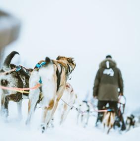 Polar Lights Tours