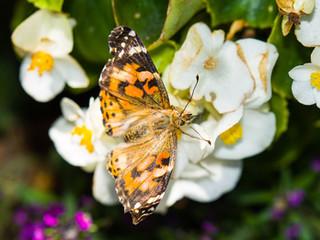 Beautiful Butterfly Pics