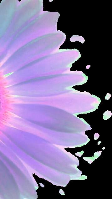flor v3.png