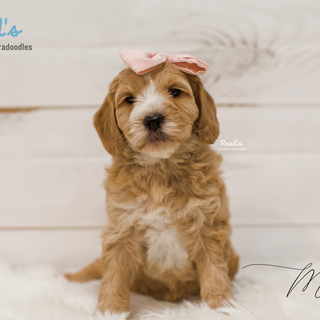 Molly 6 weeks.png