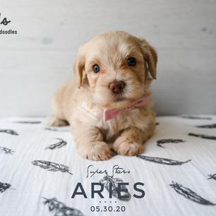 REVISED Aries 5 weeks.png