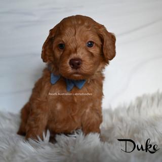 Duke 5 weeks.jpg
