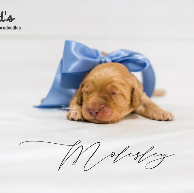 Molesley blue-2.jpg