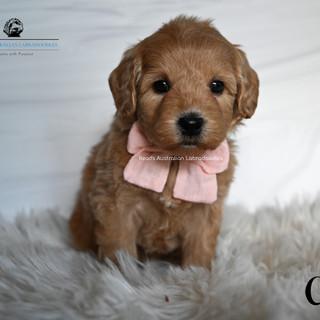 Chloe 5 weeks.jpg