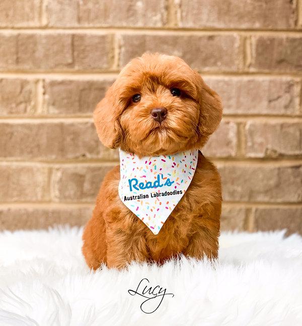 Lucy 8 weeks.jpg
