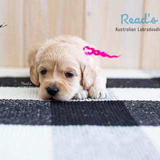 Roxie - 3 weeks.jpg