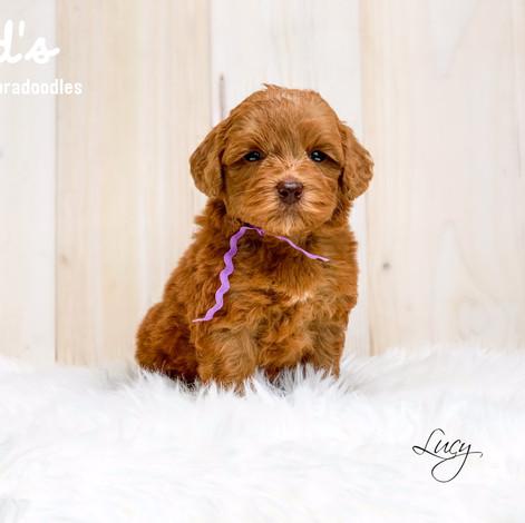 Lucy 5 weeks.jpg