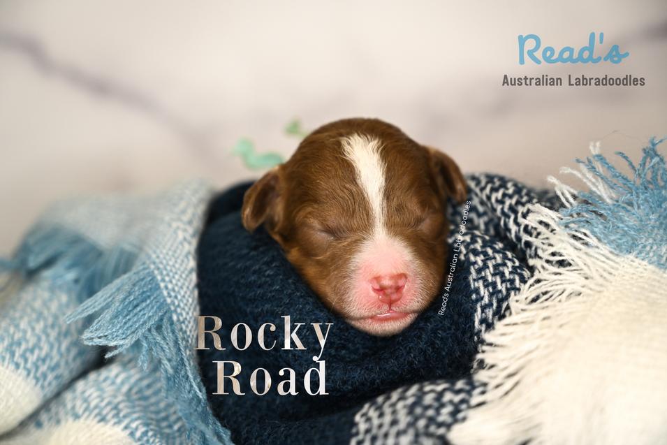 Baby Blue Rocky Road 1 week.png