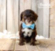 Edmund 6 weeks.jpg