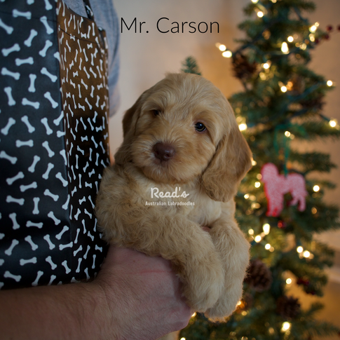 Mr. Carson 7.5 weeks.png