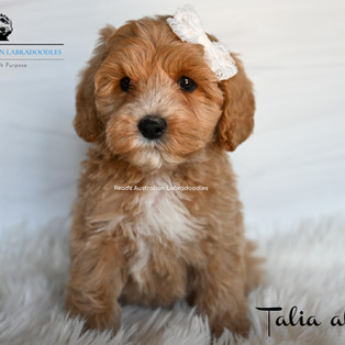 Talia al Ghul 7 weeks.jpg