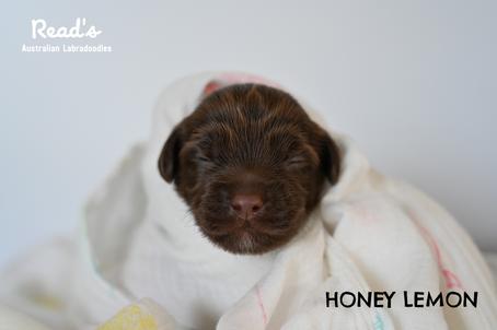 Honey Lemon pink 1 week.png