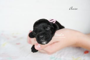 Baby Pink_Anise 1 week.png