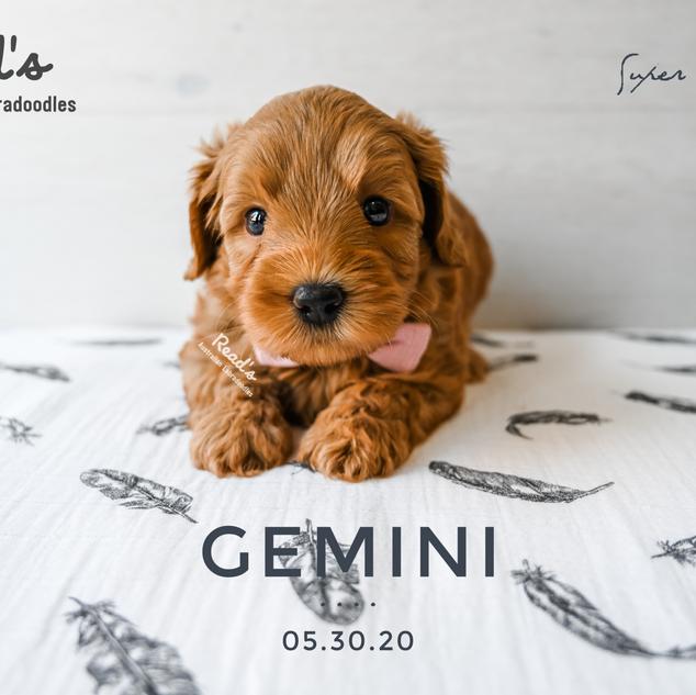 REVISED Gemini 5 weeks.png