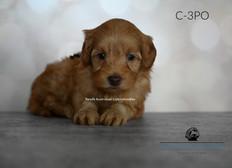 C3PO BLACK 5 WEEKS.jpg