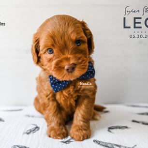 Leo 5 weeks.png