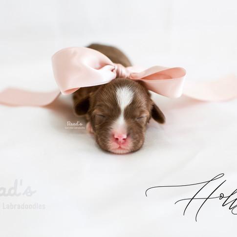 Holly_pink.jpg
