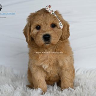 Chloe 7 weeks.jpg
