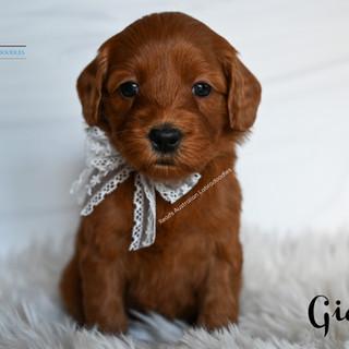 Gidget 5 weeks.jpg