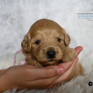 Chloe 3 weeks.jpg