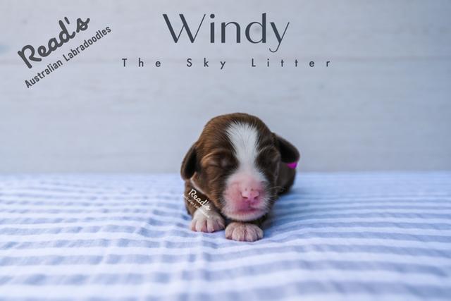 Fuchsia - Windy one week.png