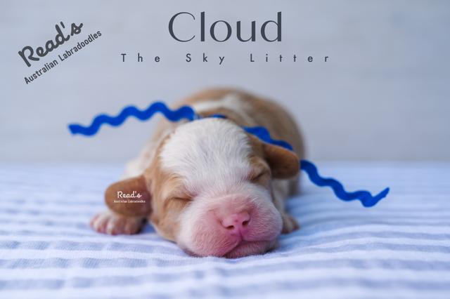 Blue - Clouds Week one.png