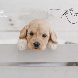 Roxi 4 weeks.jpg