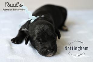 Baby Blue - Nottingham week1.png