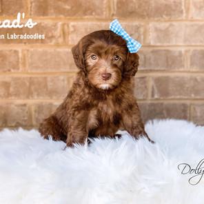 Maple - Dolly 7 weeks.jpg