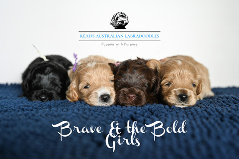 Brave & the bold 1-2 weeks girls.jpg