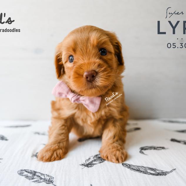 REVISED Lyra 5 weeks.png