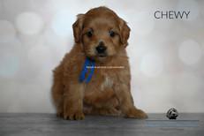 CHEWY BLUE 5 WEEKS.jpg