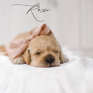 Roxi pink 2 weeks.jpg