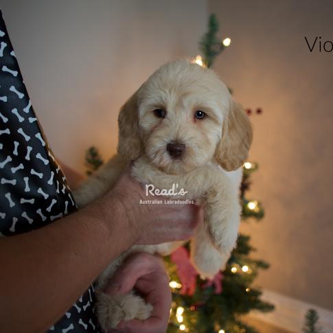 Violet 7.5 weeks.png
