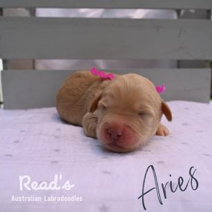 Fuchsia_Aries 1 week.png