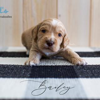 Bailey 3 weeks.jpg