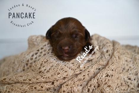 Baby Pink- Pancake 1 week.png