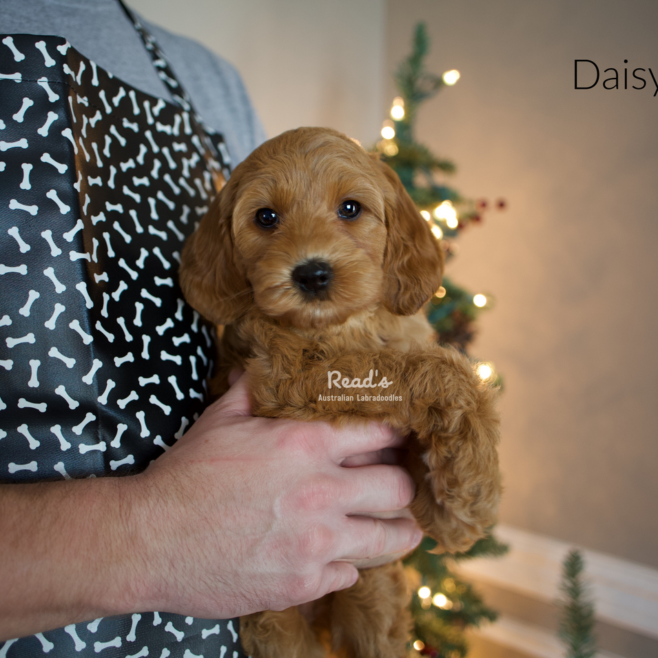 Daisy 7.5 weeks.png