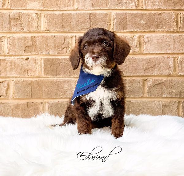Edmund 8 weeks.jpg