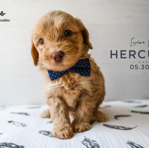 Hercules 5 weeks.png