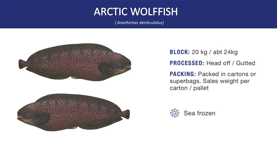 arctic wolffish.jpg